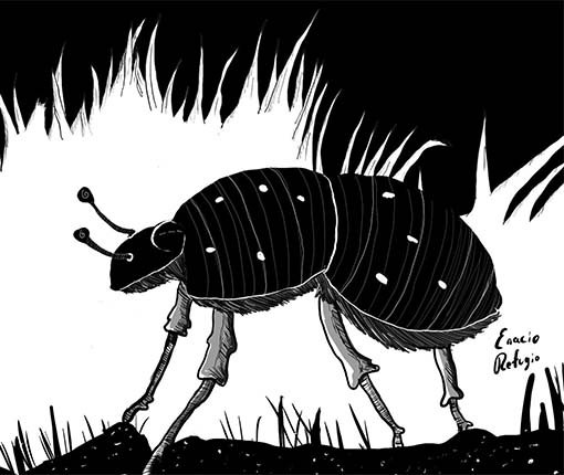 Illustration of black beetle in the grass